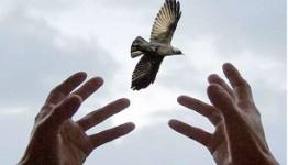 رهایی محکوم به قصاص از چوبه دار در مازندران