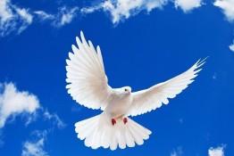 صلح و سازش در پرونده قتل عمد در سردشت
